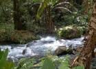 Poema Parque Nacional de Uruapan