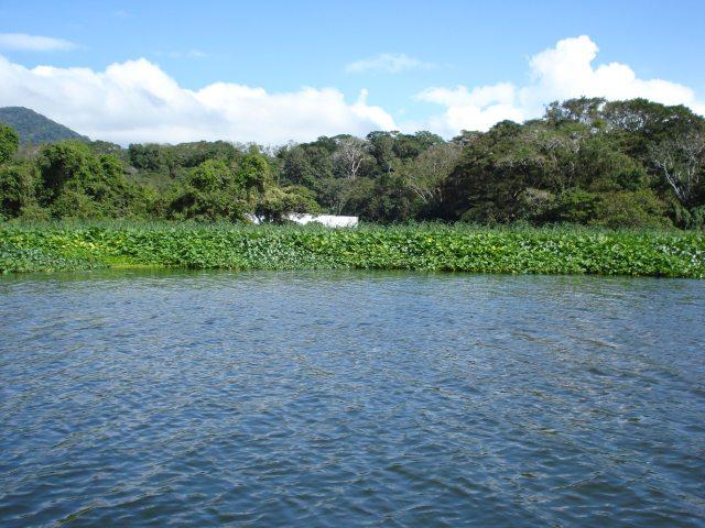 Poema Que… ¿No Oyen Llorar al Lago?