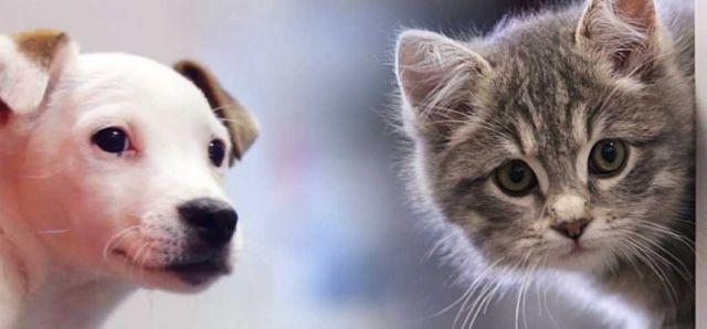 Propósitos de Año Nuevo ¿Incluiste a los Animales en tu Lista?