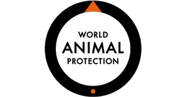 Protección Animal Mundial Celebra el Compromiso de Tim Hortons y Burger King de Mejorar el Bienestar de los Pollos hacia el 2024