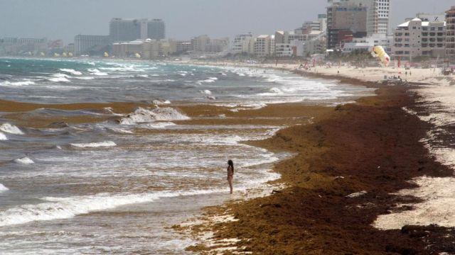 ¿Qué Actividades hacer en Cancún aun con Sargazo?