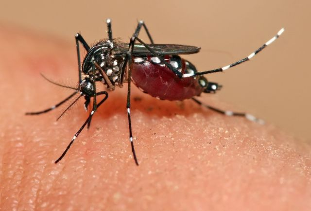 ¿Qué es el virus del Zika? Detección Síntomas y Tratamiento