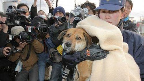 Rescate de Perro que Sobrevivió 21 días tras Tsunami en Japón