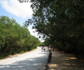 Rumbo a Tulum Quintana Roo México