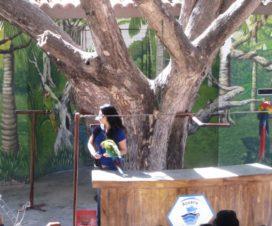 Show de Aves en El Acuario de Mazatlán