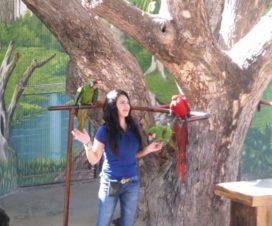 Show de Aves en El Acuario de Mazatlán 10