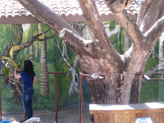 Show de Aves en El Acuario de Mazatlán 2