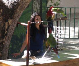 Show de Aves en El Acuario de Mazatlán 4