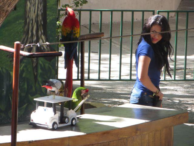 Show de Aves en El Acuario de Mazatlán 5