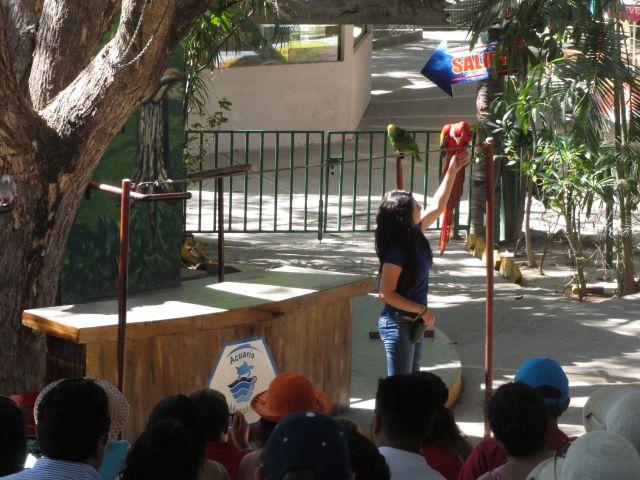 Show de Aves en El Acuario de Mazatlán 7