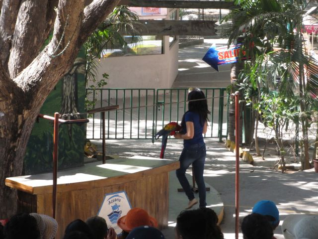 Show de Aves en El Acuario de Mazatlán 8