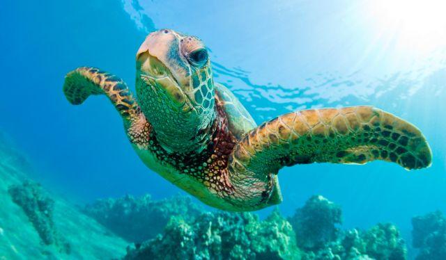 TripAdvisor Cesa la Venta de Entradas al Centro de Tortugas de Islas Caimán