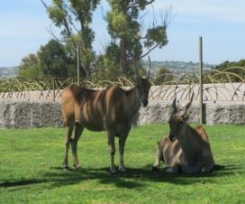 Una Mirada a Africam Safari Puebla