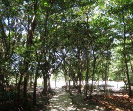 Una Mirada a la Zona Arqueológica de San Miguelito Cancún