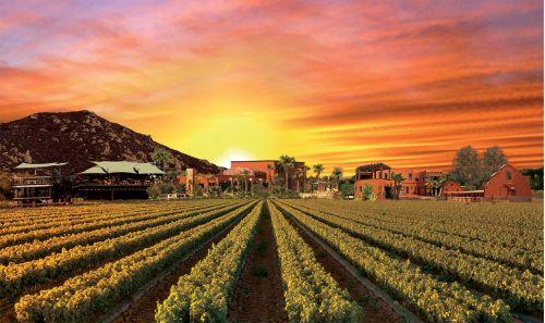 Valle de Guadalupe Ruta del Vino