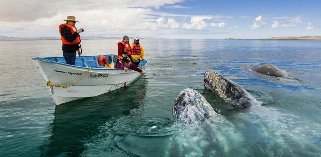 Viaja por México y Conoce su Fascinante Fauna
