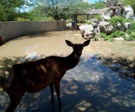 Zoológico Centro Ecológico de Hermosillo