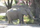 El zoológico de Guadalajara