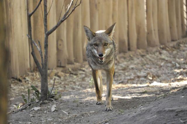 Zoológico Los Coyotes Ciudad de México