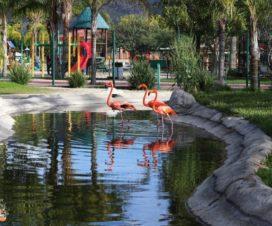 Zoológico Parque del Niño Jersey Valle de Guadalupe